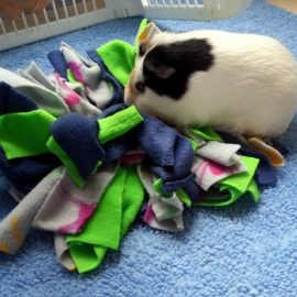 What is a Snuffler (Snuffle Mat)?